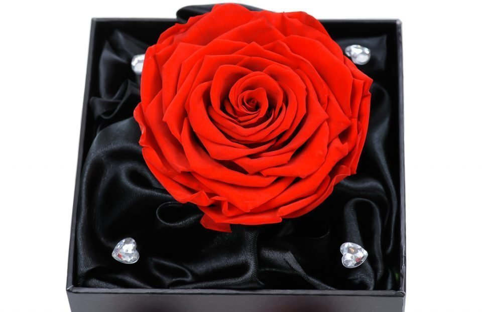 Single-Infinity-Red-Rose-in-a-box