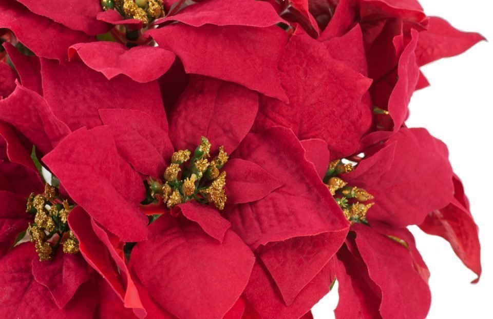 Red-&-gold-Christmas-centerpiece